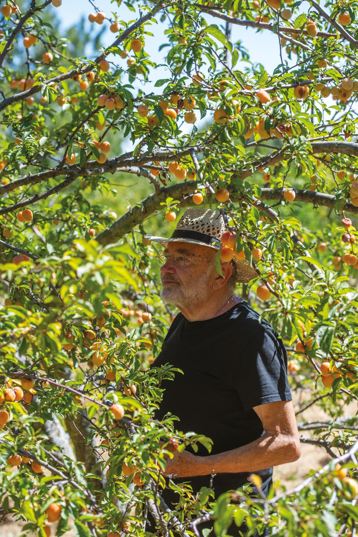 Robert Kran, l'homme qui plantait des arbres - Dominique Memmi - Quì magazine